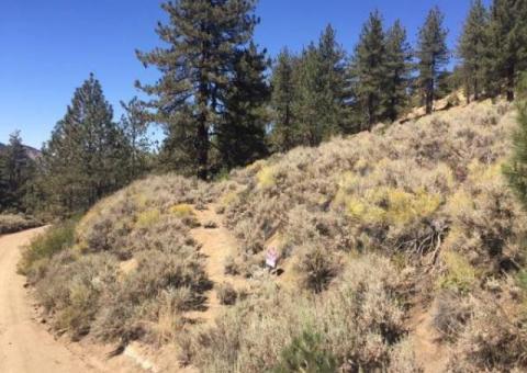 Raw land 2.8 acres 6500' pine trees