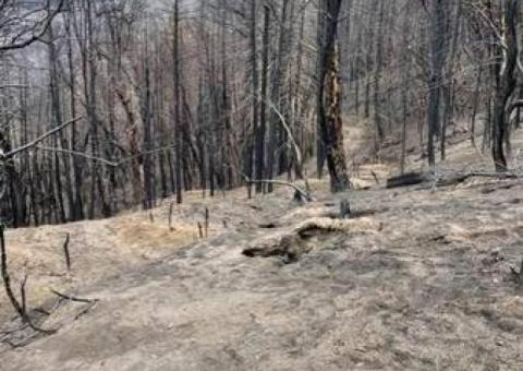Large Rural Wooded lot located minutes from Lake Madrone