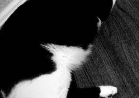 Lost Black/White Cat