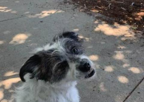 lost terrier mix